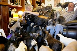 41 dogs in a 3 bed semi