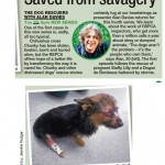 dog-rescuers-series-4-5-daily-mirror
